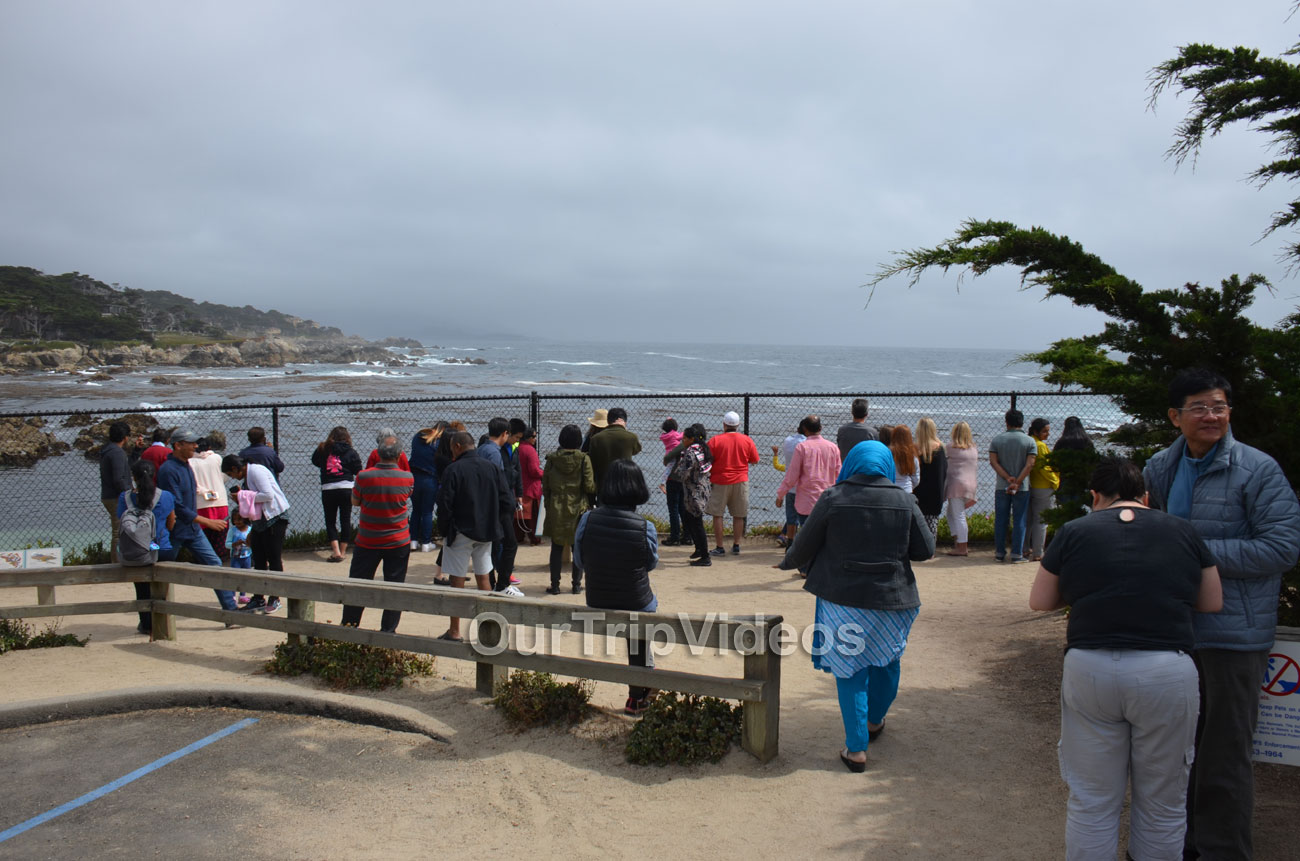 17-Mile Drive, Pebble Beach, CA, USA - Picture 23 of 25