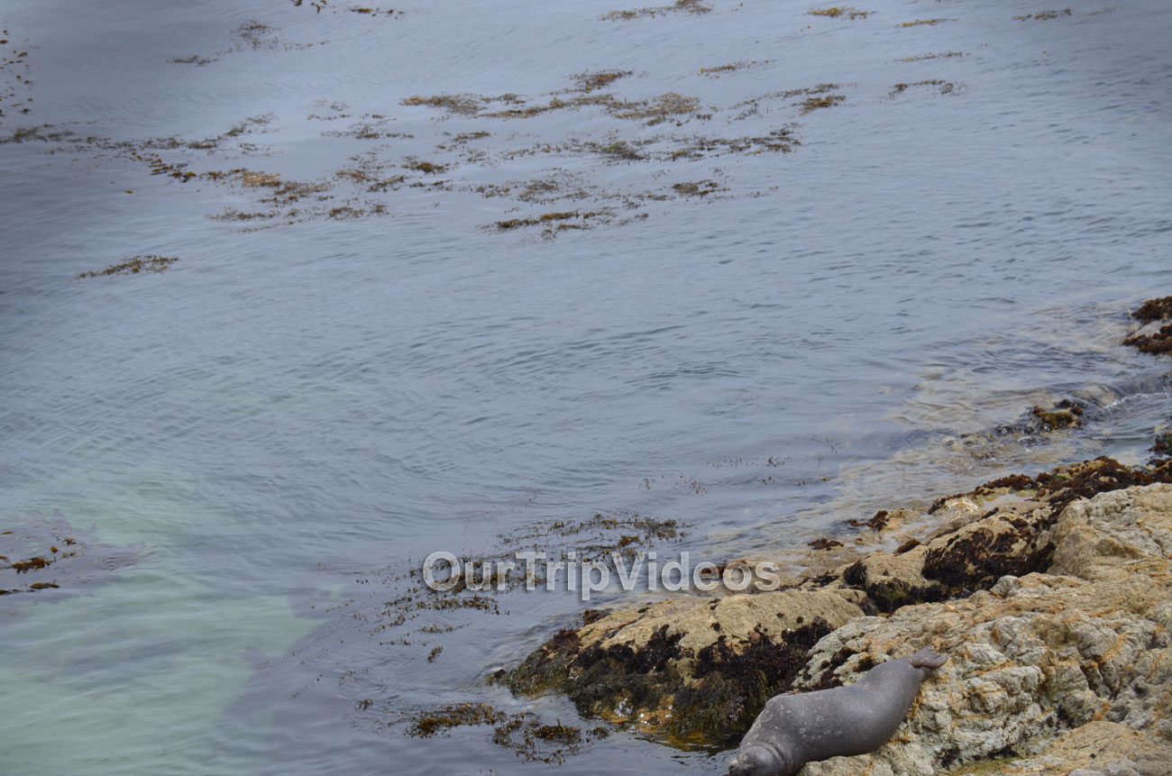 17-Mile Drive, Pebble Beach, CA, USA - Picture 26 of 50