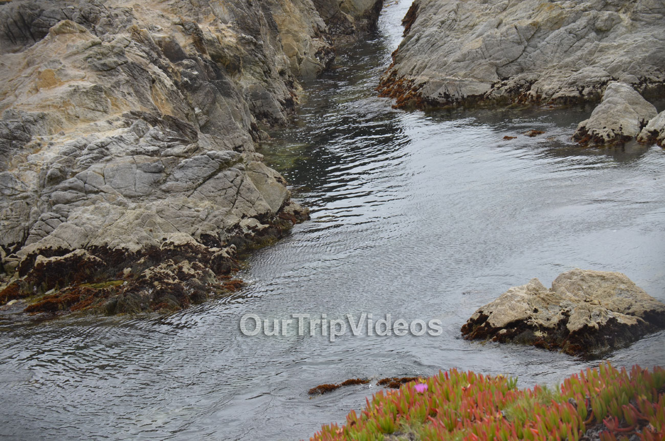17-Mile Drive, Pebble Beach, CA, USA - Picture 29 of 50