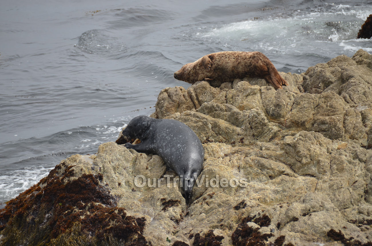 17-Mile Drive, Pebble Beach, CA, USA - Picture 35 of 50