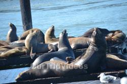 SF Fleet Week - Air Show(Fishermans Wharf), San Francisco, CA, USA - Picture 3