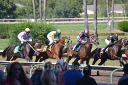 Pictures of Oak tree at Pleasanton Fall Horse Racing, Pleasanton, CA, USA
