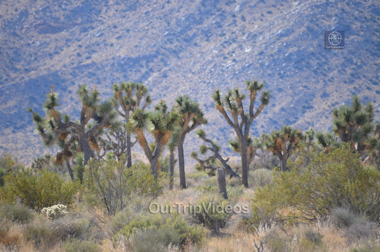 Joshua Tree National Park, Joshua Tree, CA, USA - Picture 16 of 25