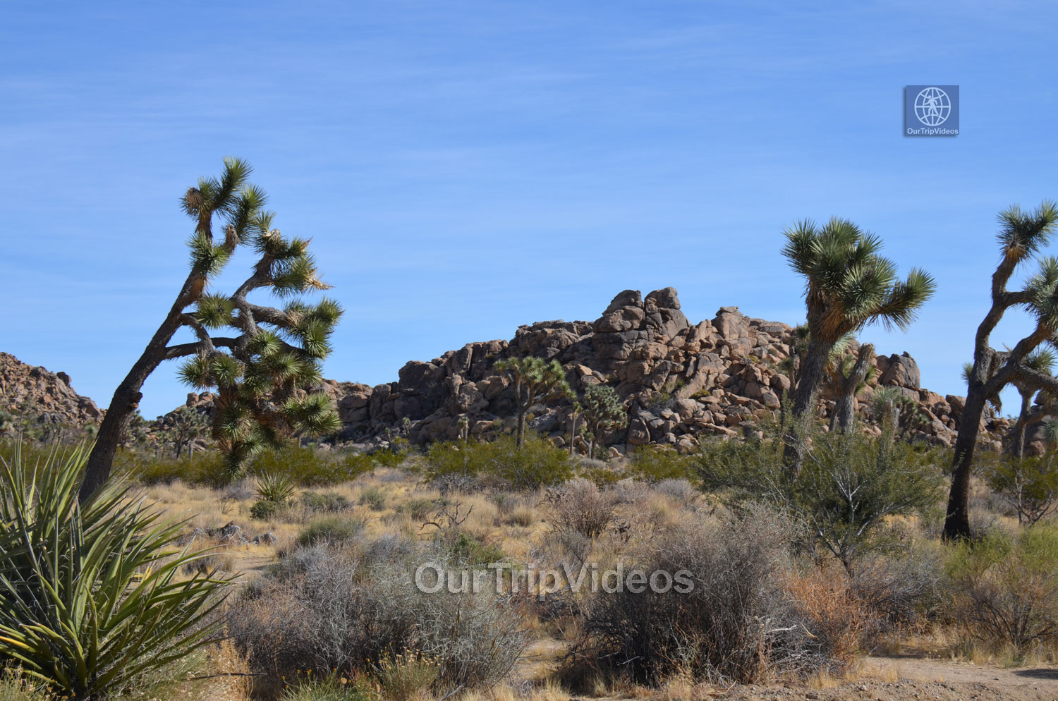 Joshua Tree National Park, Joshua Tree, CA, USA - Picture 17 of 25