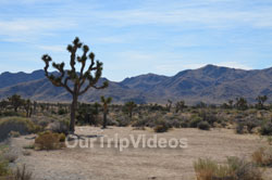 Joshua Tree National Park, Joshua Tree, CA, USA - Picture 11