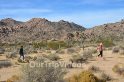 Joshua Tree National Park, Joshua Tree, CA, USA - Picture 13