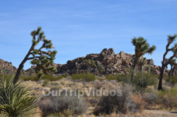 Joshua Tree National Park, Joshua Tree, CA, USA - Picture 17