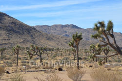 Joshua Tree National Park, Joshua Tree, CA, USA - Picture 19