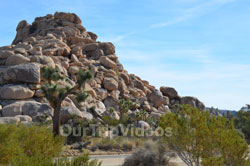 Joshua Tree National Park, Joshua Tree, CA, USA - Picture 21