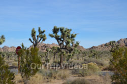 Joshua Tree National Park, Joshua Tree, CA, USA - Picture 23
