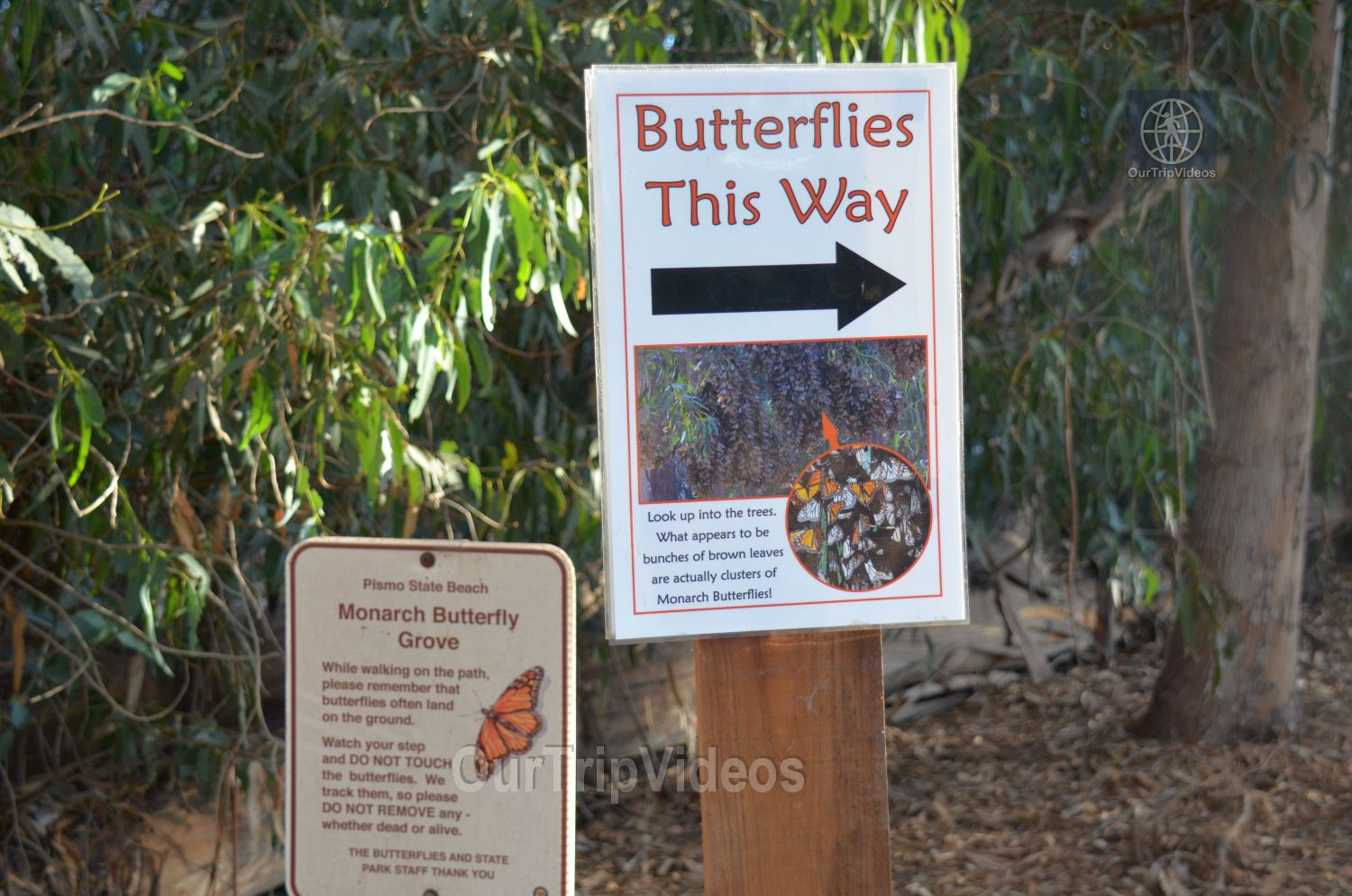 Monarch Butterfly Grove, Pismo Beach, CA, USA - Picture 6 of 25
