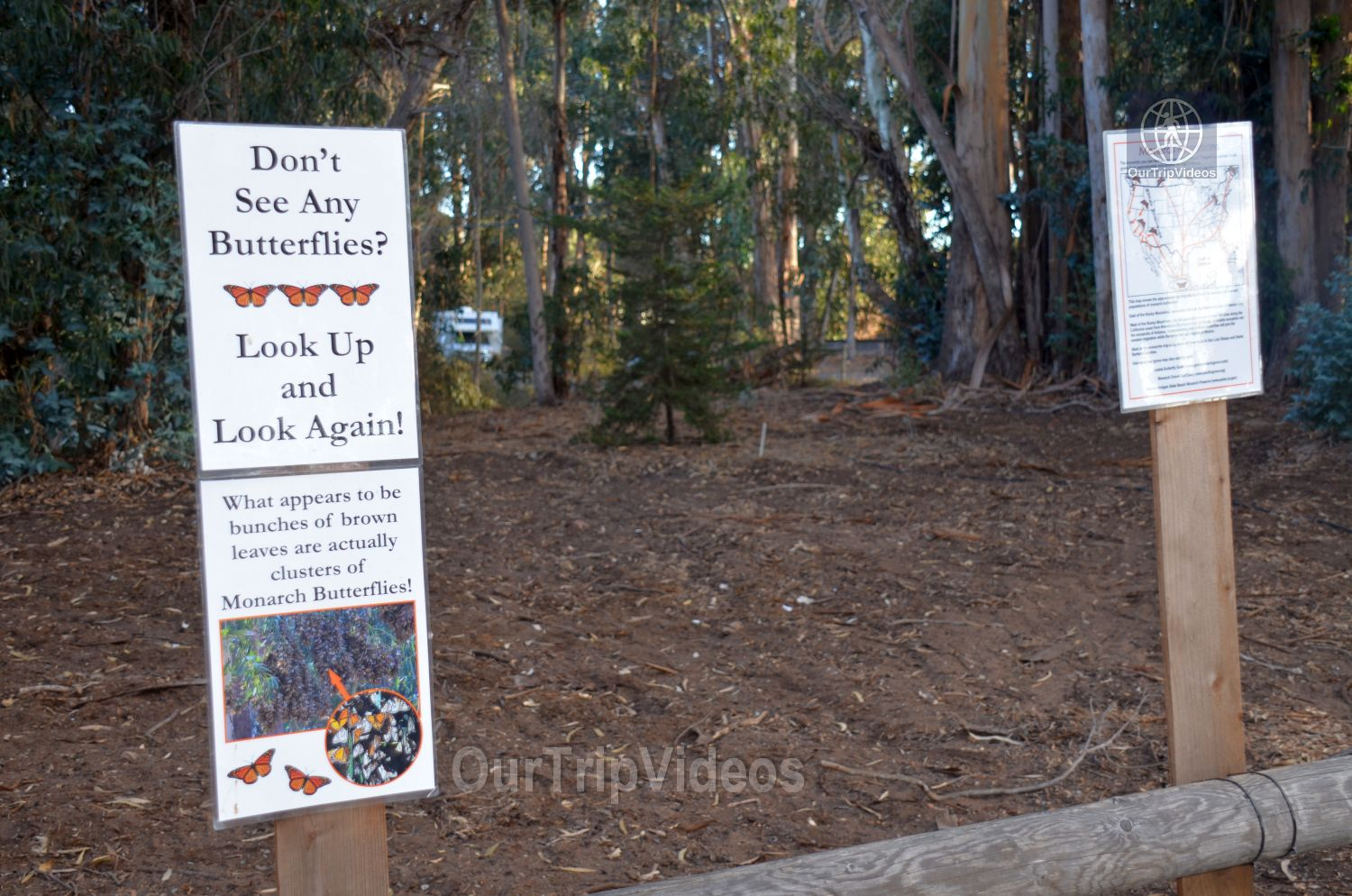 Monarch Butterfly Grove, Pismo Beach, CA, USA - Picture 19 of 25