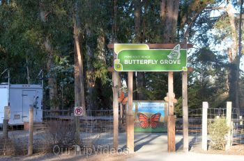 Monarch Butterfly Grove, Pismo Beach, CA, USA - Picture 1