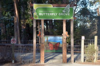Monarch Butterfly Grove, Pismo Beach, CA, USA - Picture 3