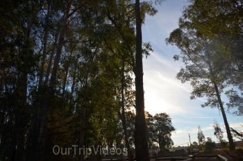 Monarch Butterfly Grove, Pismo Beach, CA, USA - Picture 7