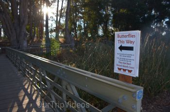 Monarch Butterfly Grove, Pismo Beach, CA, USA - Picture 10