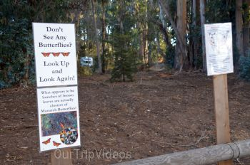 Monarch Butterfly Grove, Pismo Beach, CA, USA - Picture 19
