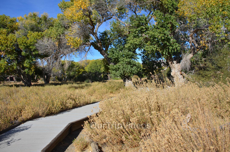 Big Morongo Canyon Preserve, Morongo Valley, CA, USA - Picture 20 of 25