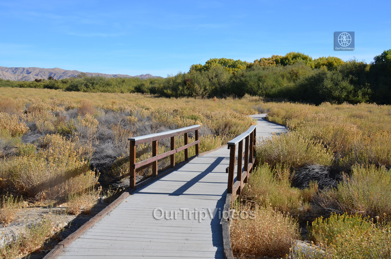 Big Morongo Canyon Preserve, Morongo Valley, CA, USA - Picture 25 of 25