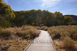 Big Morongo Canyon Preserve, Morongo Valley, CA, USA - Picture 16