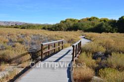 Big Morongo Canyon Preserve, Morongo Valley, CA, USA - Picture 25