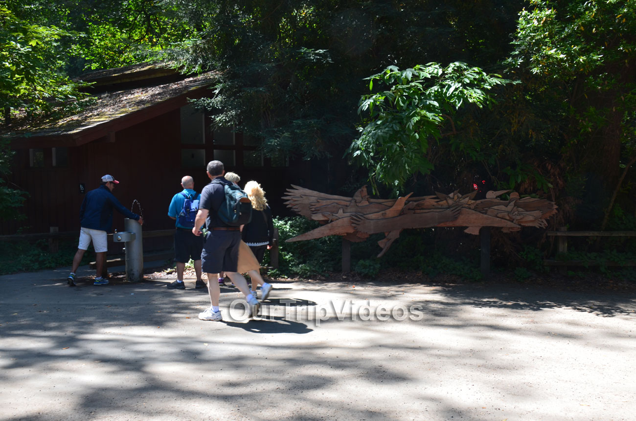 Muir Woods National Monument, Mill Valley, CA, USA - Picture 2 of 25