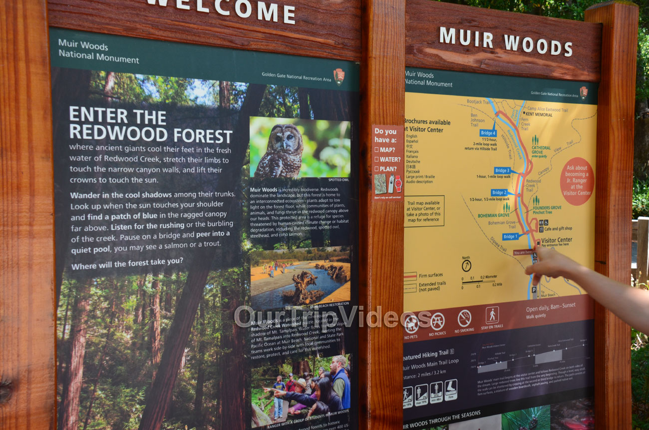 Muir Woods National Monument, Mill Valley, CA, USA - Picture 4 of 25