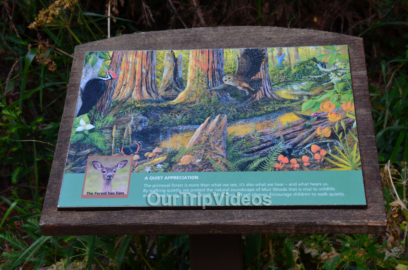 Muir Woods National Monument, Mill Valley, CA, USA - Picture 7 of 25