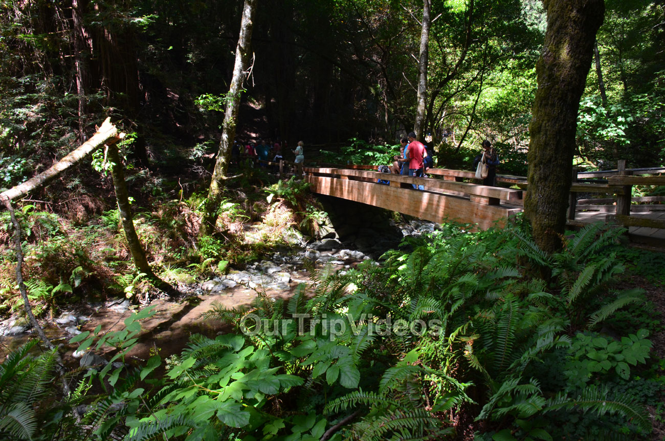Muir Woods National Monument, Mill Valley, CA, USA - Picture 8 of 25