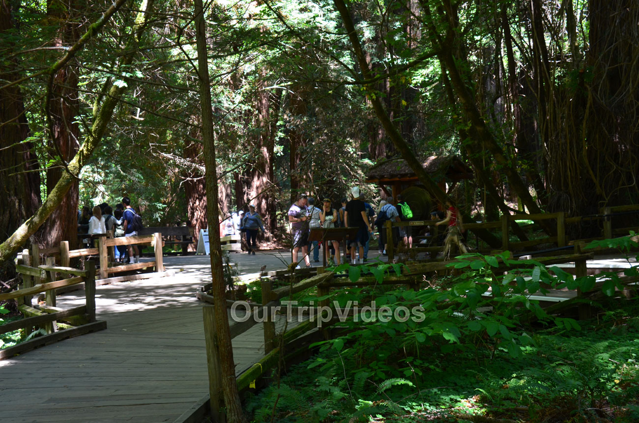 Muir Woods National Monument, Mill Valley, CA, USA - Picture 15 of 25
