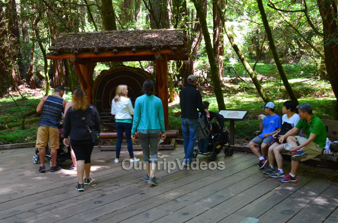 Muir Woods National Monument, Mill Valley, CA, USA - Picture 17 of 25