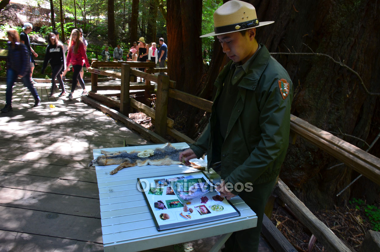 Muir Woods National Monument, Mill Valley, CA, USA - Picture 18 of 25