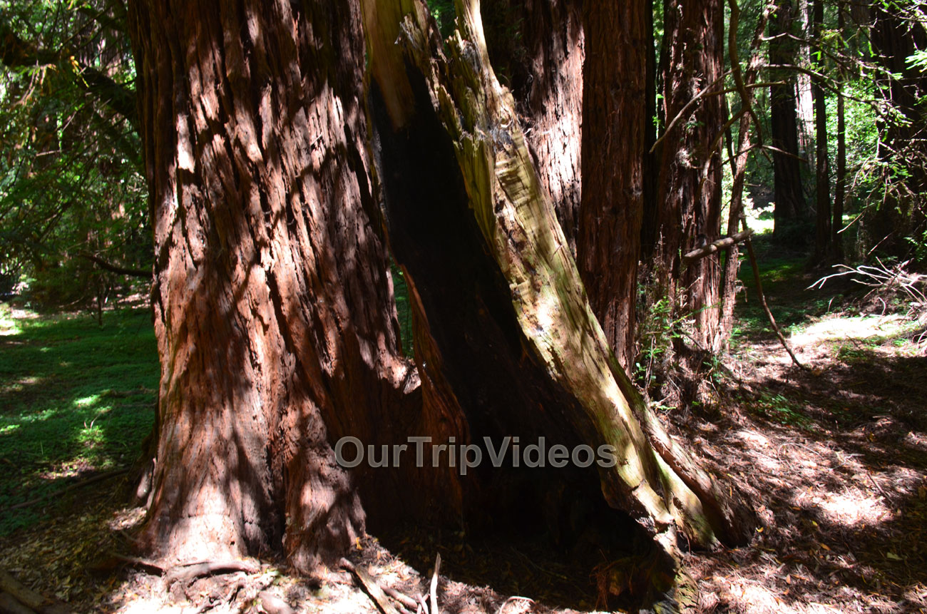 Muir Woods National Monument, Mill Valley, CA, USA - Picture 19 of 25