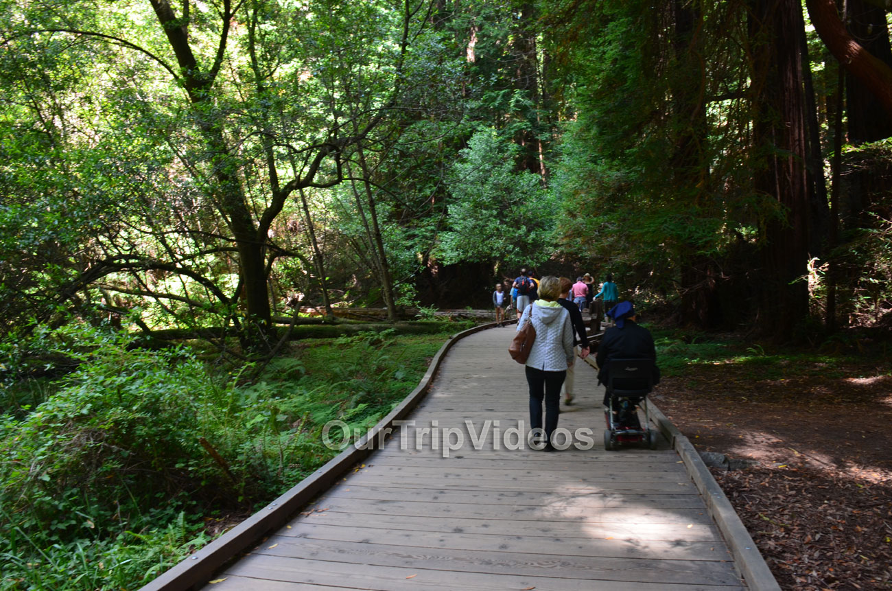 Muir Woods National Monument, Mill Valley, CA, USA - Picture 22 of 25