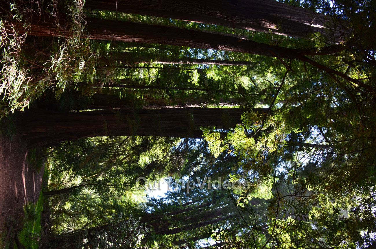 Muir Woods National Monument, Mill Valley, CA, USA - Picture 23 of 25