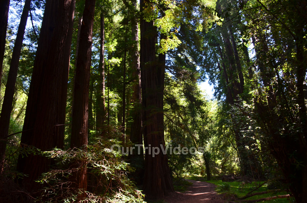 Muir Woods National Monument, Mill Valley, CA, USA - Picture 24 of 25