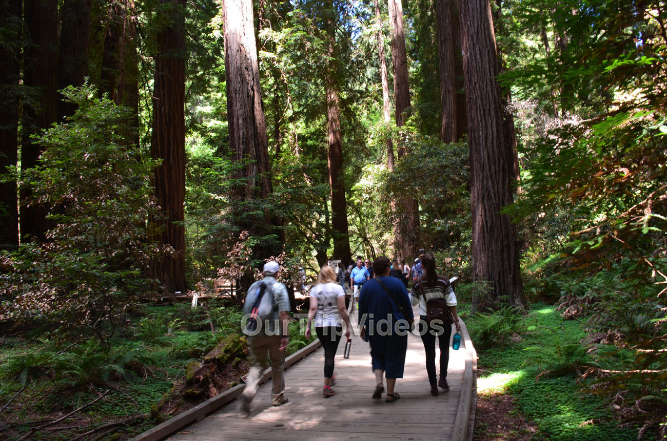 Muir Woods National Monument, Mill Valley, CA, USA - Picture 26 of 50