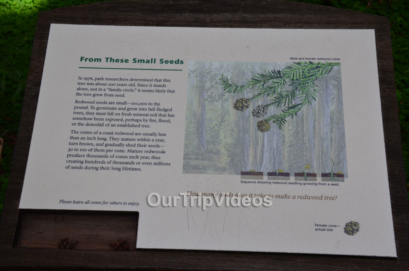Muir Woods National Monument, Mill Valley, CA, USA - Picture 27 of 50