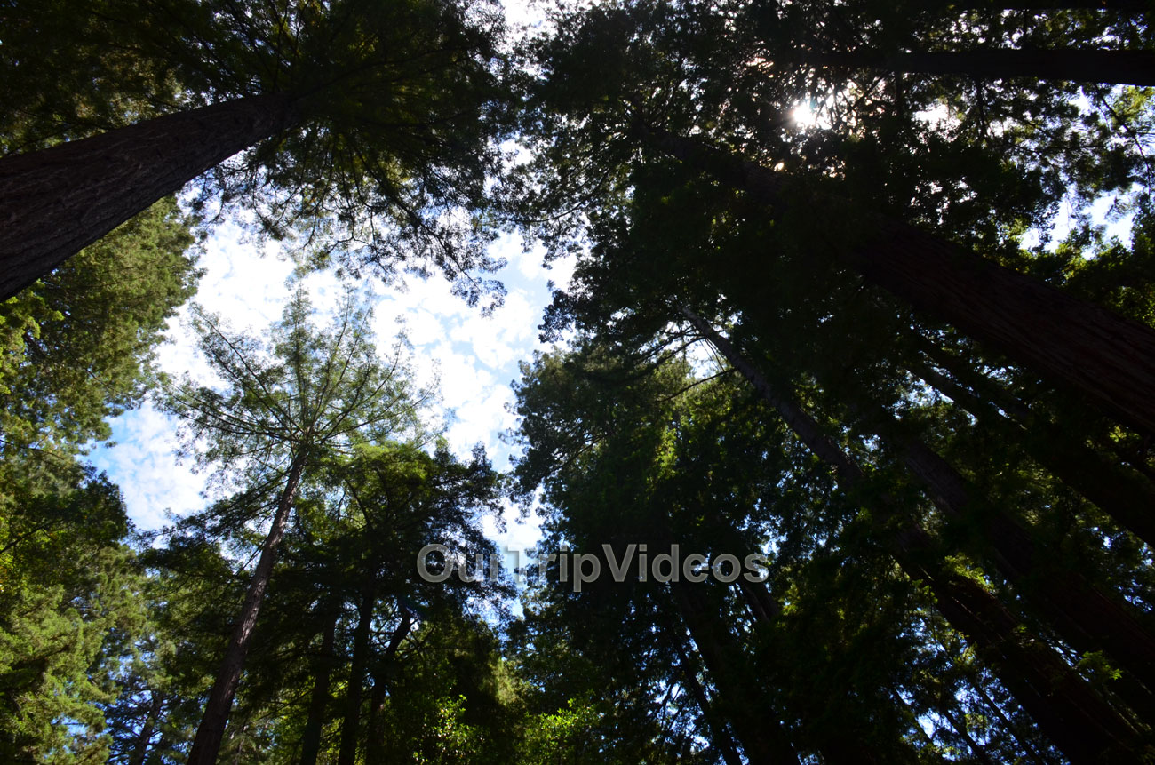 Muir Woods National Monument, Mill Valley, CA, USA - Picture 28 of 50