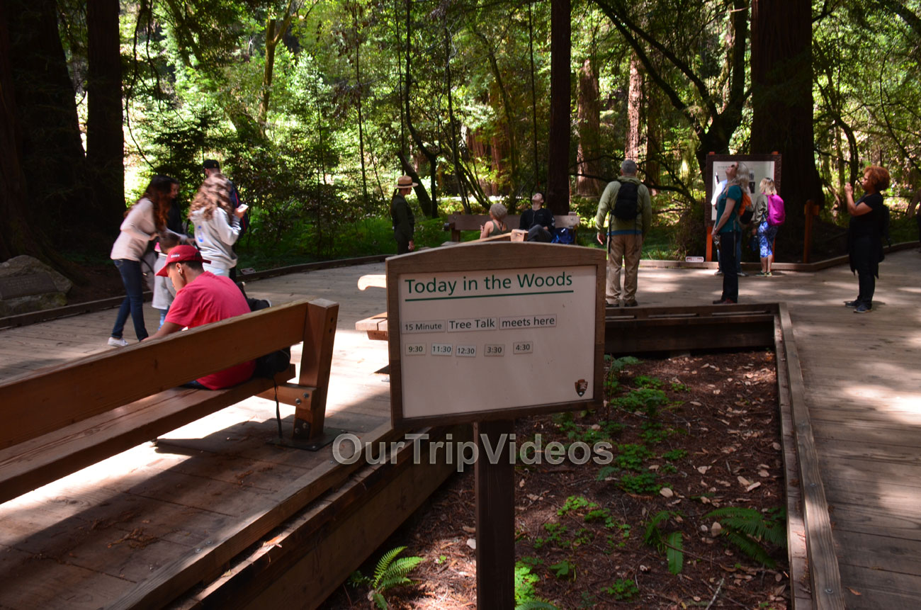 Muir Woods National Monument, Mill Valley, CA, USA - Picture 29 of 50