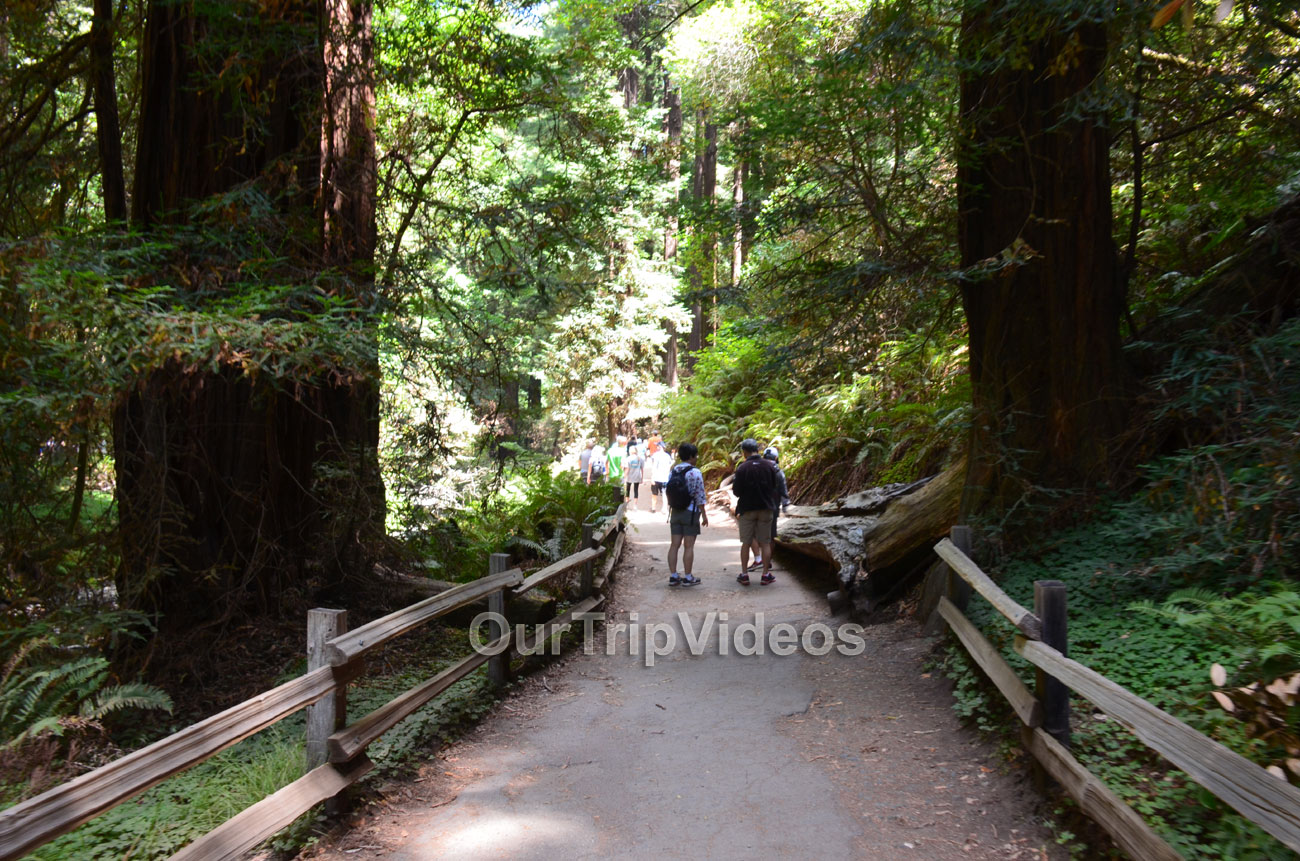 Muir Woods National Monument, Mill Valley, CA, USA - Picture 33 of 50