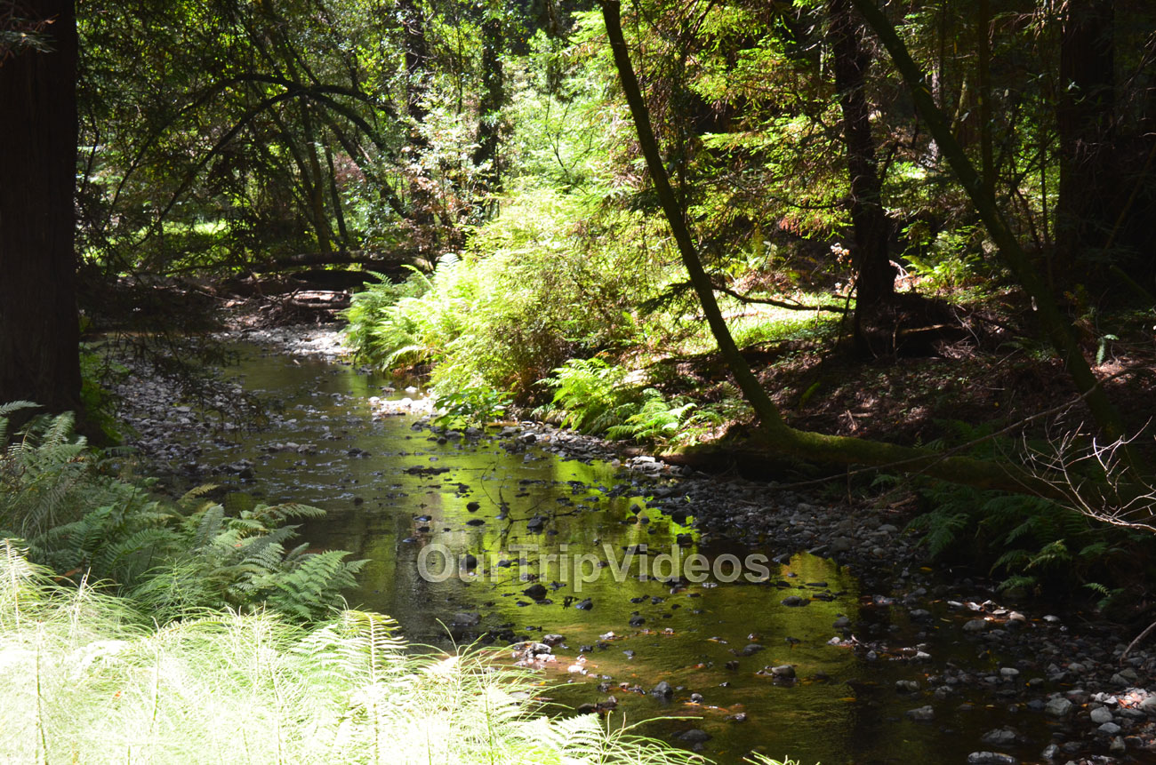 Muir Woods National Monument, Mill Valley, CA, USA - Picture 35 of 50