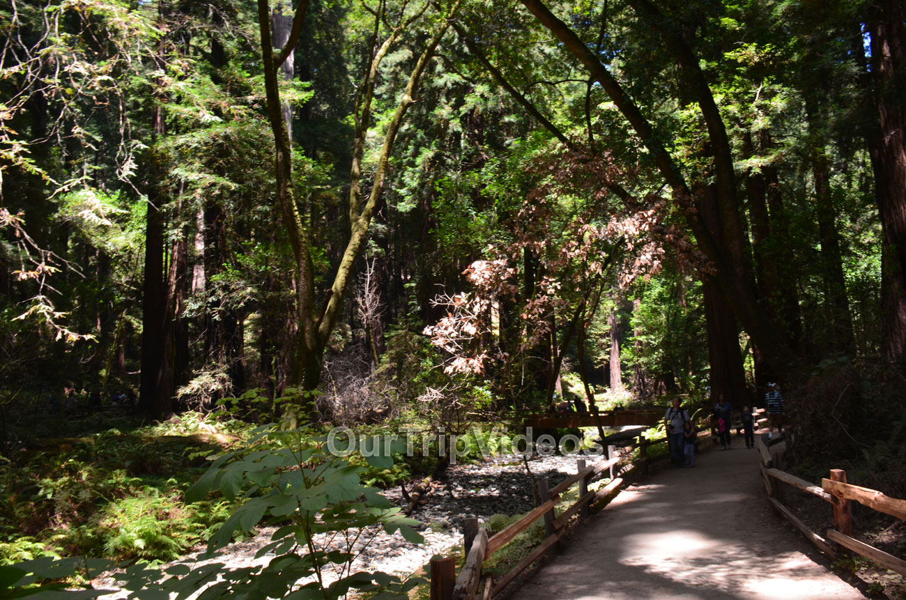 Muir Woods National Monument, Mill Valley, CA, USA - Picture 36 of 50
