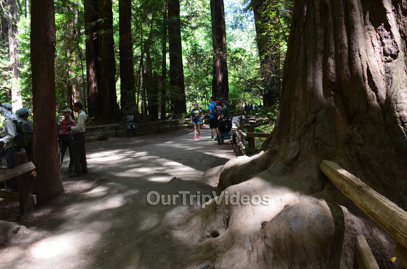 Muir Woods National Monument, Mill Valley, CA, USA - Picture 39 of 50