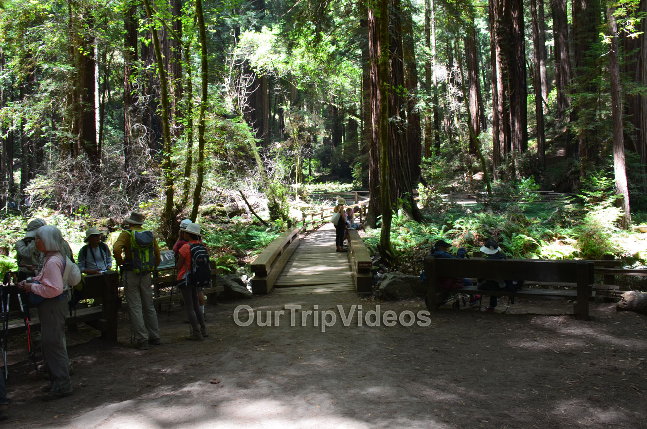 Muir Woods National Monument, Mill Valley, CA, USA - Picture 40 of 50