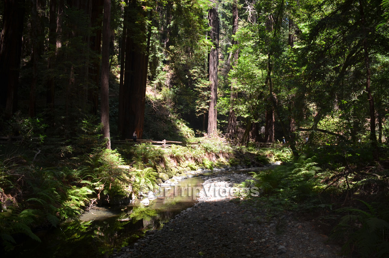 Muir Woods National Monument, Mill Valley, CA, USA - Picture 41 of 50