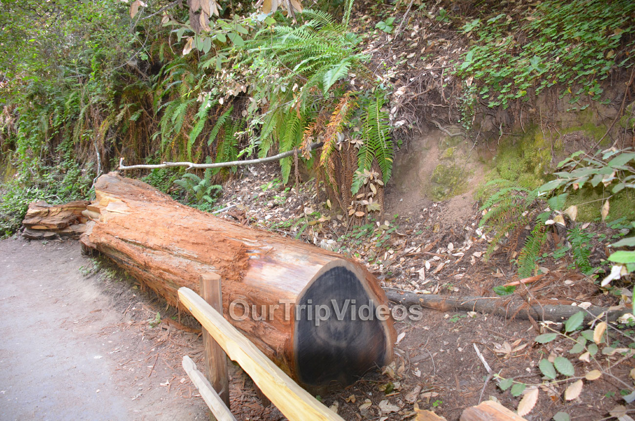 Muir Woods National Monument, Mill Valley, CA, USA - Picture 42 of 50