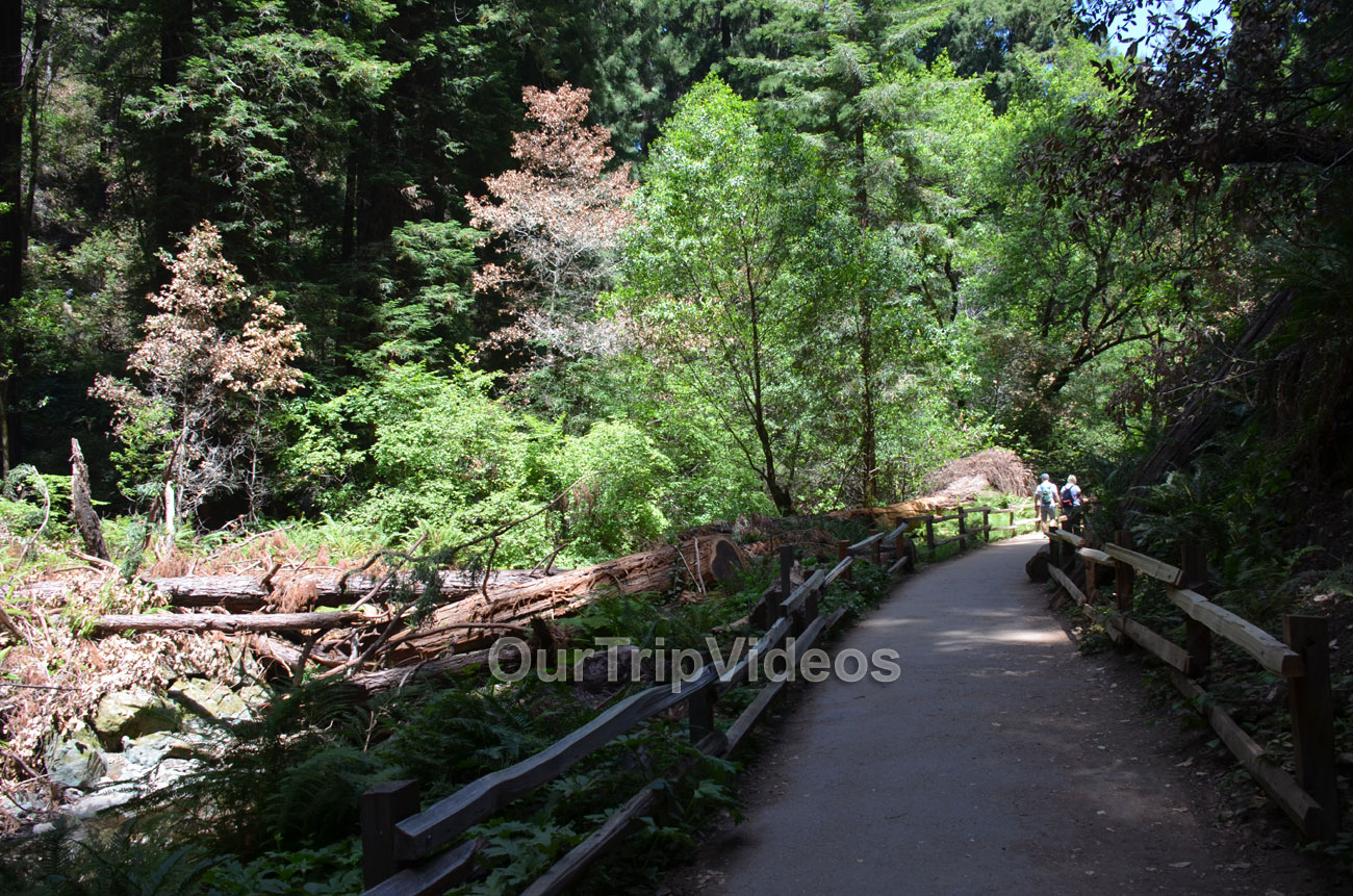 Muir Woods National Monument, Mill Valley, CA, USA - Picture 43 of 50