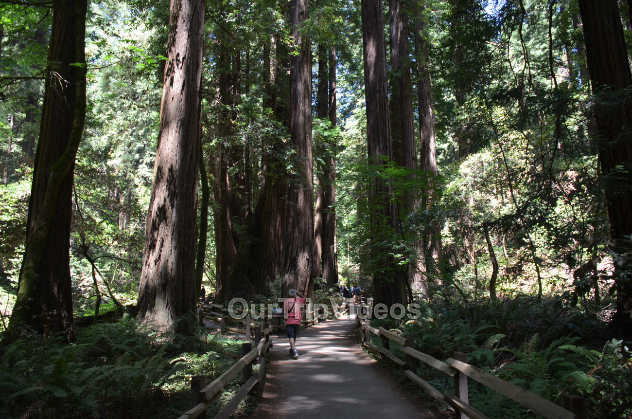 Muir Woods National Monument, Mill Valley, CA, USA - Picture 44 of 50