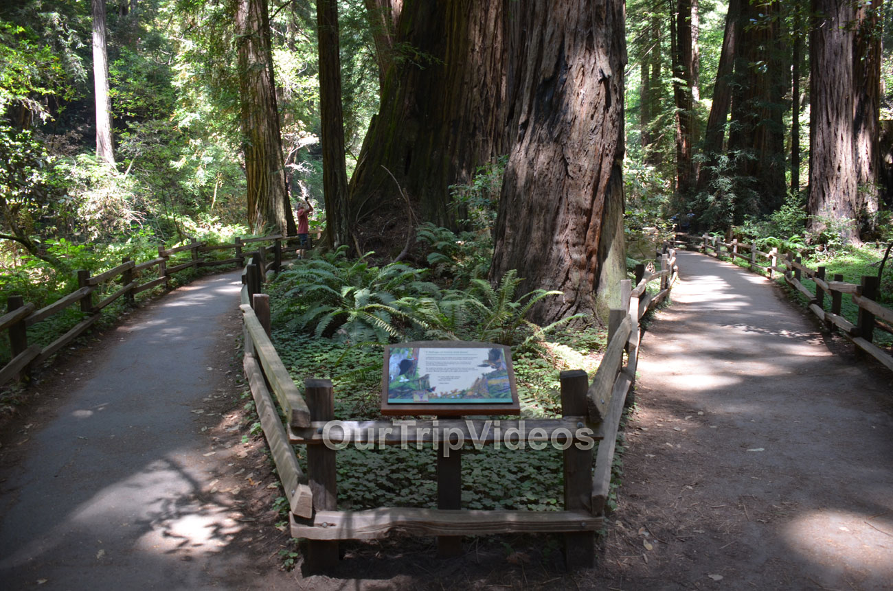 Muir Woods National Monument, Mill Valley, CA, USA - Picture 45 of 50